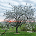"Orchard: ""Serendipity"" (Ici d'ailleurs/Mind Travels Series)"