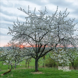 """Orchard: """"Serendipity"""" (Ici d'ailleurs/Mind Travels Series)"""